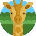 008-giraffe-1